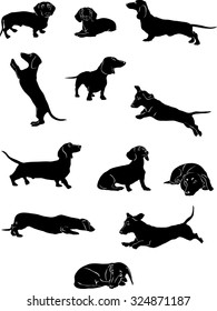 Dachshund, dachshund figure, vector, different positions, illustration, black and white, silhouette