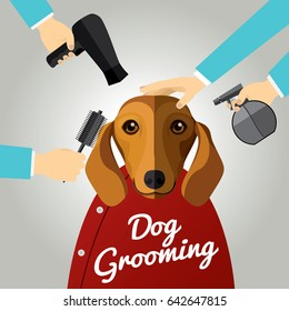 Dachshund getting groomed at pet grooming salon.