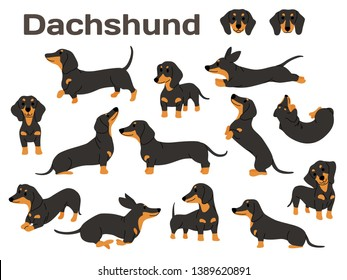 dachshund illustration,dog poses,dog breed,dachshund in action