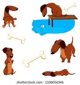 Dachshund poses set. Dog sitting and look at the fish. Dog lies. Cute dachshund dog set. Happy dog illustration.