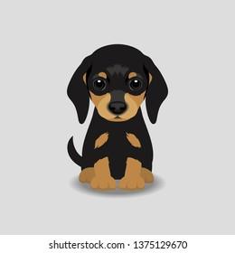 Dachshund Puppy Vector Illustration. Dog isolated