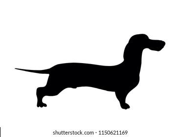 Dachshund silhouette. Black silhouette of a shortlegged Badger Dog, hand drawn vector illustration isolated on white, logo, t-shirt design.