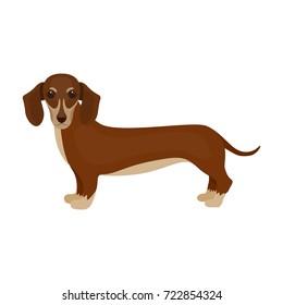 Dachshund, single icon in cartoon style.Dachshund, vector symbol stock illustration web.