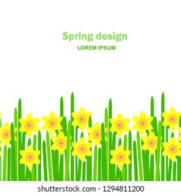Daffodil seamless background. Yellow spring flowers, green leaves on white background, Spring design, Lorem ipsum. Flat design element stock vector illustration for web, for print