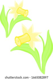 daffodil vector drawing spring flowers