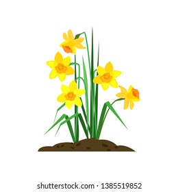 Daffodils cartoon illustration. Yellow flowers with green leaves. Spring flowers concept. Vector illustration can be used for topics like nature, garden, springtime