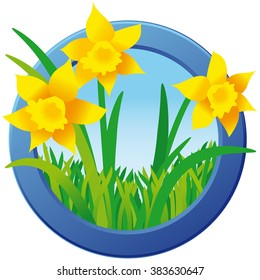 Daffodils in green grass in blue round frame; Spring motif; Illustration