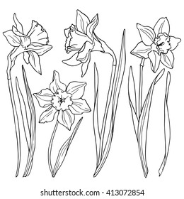 Daffodils, line drawings of flowers.