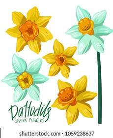 Daffodils. Spring flowers. Vector illustration