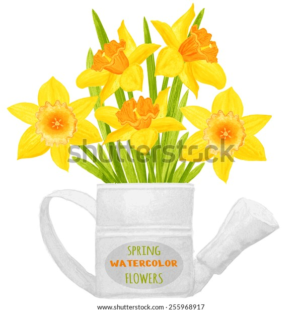 Daffodils in a watering can. Watercolor vector illustration. Floral design elements. Global color used.
