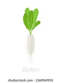 Daikon plant. Long white winter radish plant. Vector illustration on white background. Raphanus sativus.