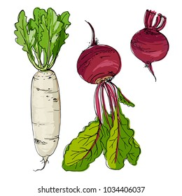 Daikon radish, beet drawn by a line on a white background. A sketch of food. Vector drawing