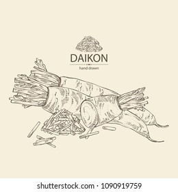 Daikon: root and a piece of daikon. Chinese radish. Vector hand drawn illustration.