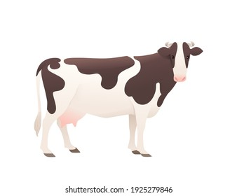 Dairy cattle ayrshire cow spotted domestic mammal animal cartoon design vector illustration on white background