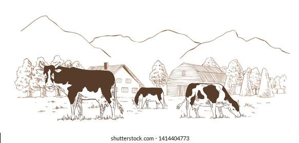 Dairy farm. Cows graze in the meadow. Rural landscape, village vintage sketch.