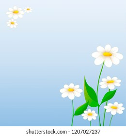 Daisies background. Vector illustration