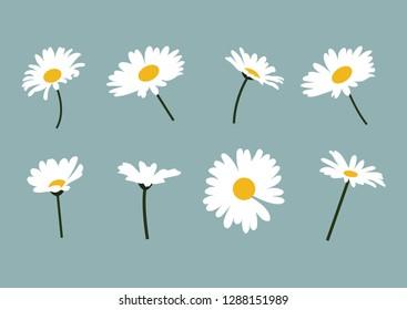 daisies, daisy, wildflowers, white flowers