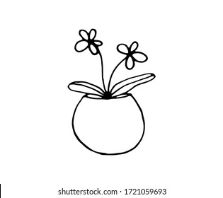 Daisies in a pot. Flowering plant for indoor interior. Vector isolated illustration with daisies on a white background. Doodle style. Print for textbooks on botany and biology. Individual element.