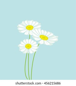 daisy bouquet on blue color background vector illustration. decorative love floral chamomile element. Background of floral pattern with daisies.