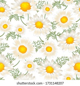 Daisy chamomile field meadow spring summer flowers seamless pattern. Trendy ditsy floral texture for print, fashion, textile, fabric, decoration, wrapping.