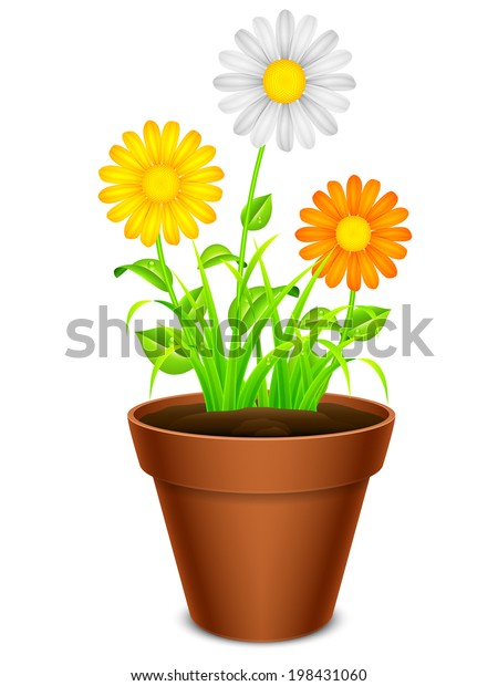 Daisy Chamomile Flowers Color Petals Pot Stock Vector ... on