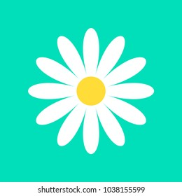 Daisy chamomile vector icon