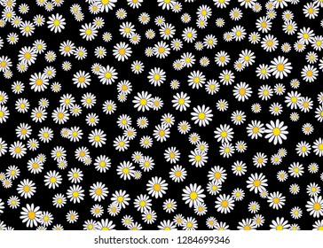 Daisy floral seamless vector background