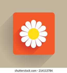 Daisy flower blossom in flat design