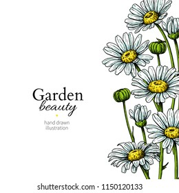 Daisy flower border drawing. Vector hand drawn floral frame. Chamomile black ink sketch. Wild botanical garden bloom.  Great for tea packaging, label, icon, greeting cards, decor