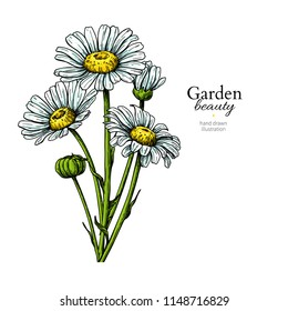 Daisy flower drawing. Vector hand drawn floral bouquet. Chamomile black ink sketch. Wild botanical garden bloom.  Great for tea packaging, label, icon, greeting cards, decor
