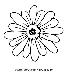 Daisy flower on white background vector illustration. Cloth design, wallpaper, wrapping, textiles, paper, cards, invitations, holiday