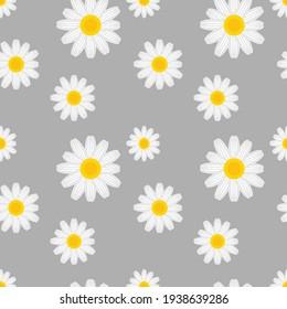 daisy flower seamless background, vector illustration