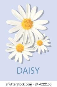 Daisy Flower Vector Polygon