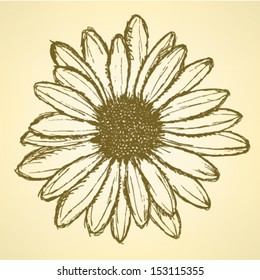Daisy flower, vector sketch background