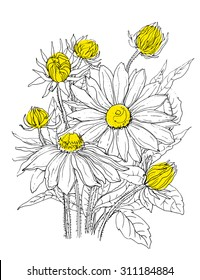 Daisy flowers in bouquet. Botanical outline Illustration. Illustration for greeting cards, wedding invitations, and other printing projects.