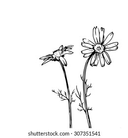 daisy flowers, composition with ink drawn wild plants, monochrome black line drawing floral card, vector illustration