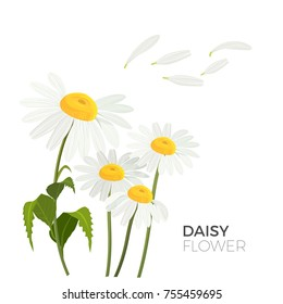 Daisy flowers with white petals and yellow middle realistic vector illustrations isolated with text. Bellis perennis species of lawn common daisies