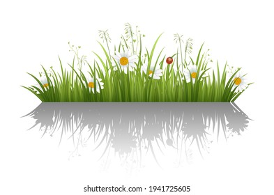 Daisy in green grass landscaped horizontal border