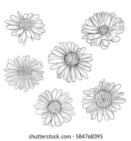 Daisy hand drawn sketches set. Vector illustration.