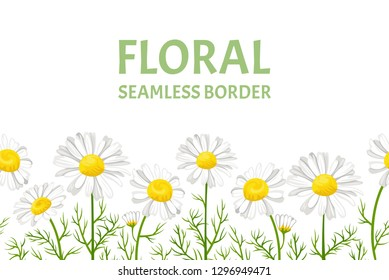 Daisy seamless pattern. Horizontal border with with white flowers of daisies isolated on white background. Vector illustration of chamomile in cartoon flat style. Floral frame.