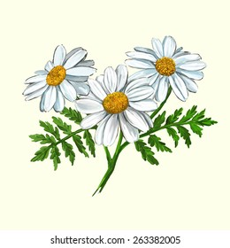 daisy vector illustration  hand drawn  painted watercolor
