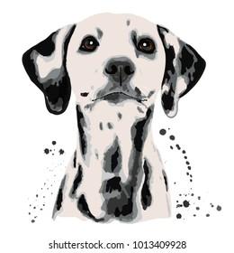 Dalmatian and blots the dog's head