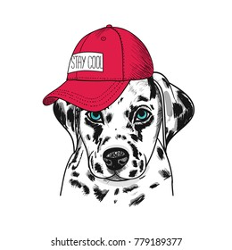 Dalmatian Dog portrait in  baseball cap. Vector illustration.