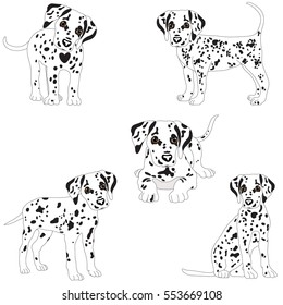 Dalmatians, cute, sad. Vector Illustration Portrait of Dalmatian Puppy. Dog isolated.