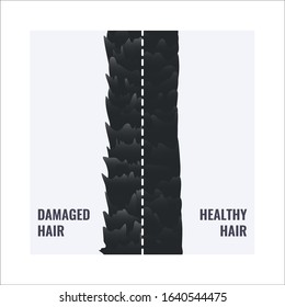 Damaged and healthy hair under the microscope. Hair follicle surface condition closeup. Trichology before and after medical concept. Vector illustration.
