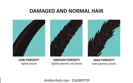 damaged and normal hair