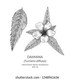 Damiana Plant Flower Vector Illustrations