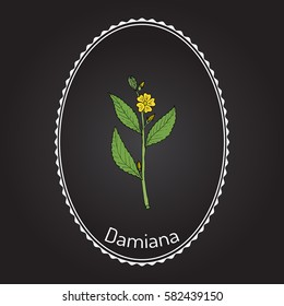 Damiana (Turnera diffusa), medicinal plant. Hand drawn botanical vector illustration