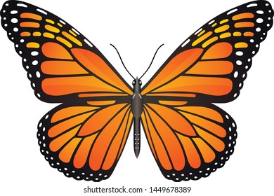 Danaus plexippus butterfly vector image for web design and print