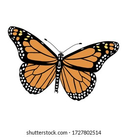 Danaus plexippus color illustration isolated on white background. Vector.